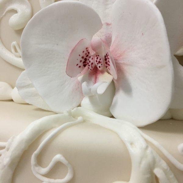 orchidea-05