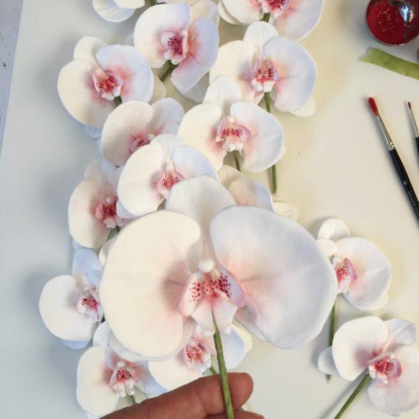 orchidea-08