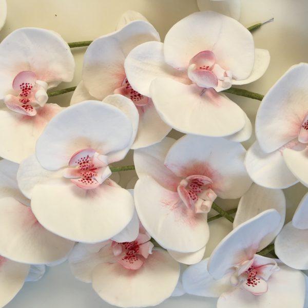 orchidea-09
