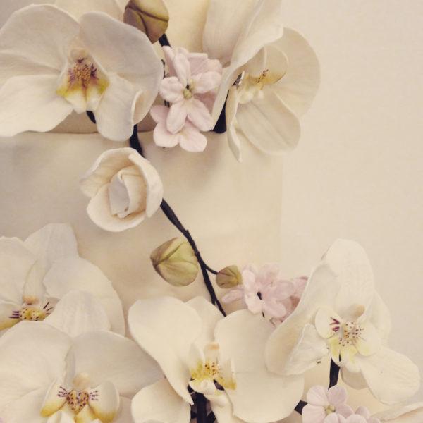 orchidea001
