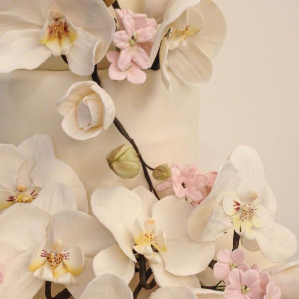 orchidea002