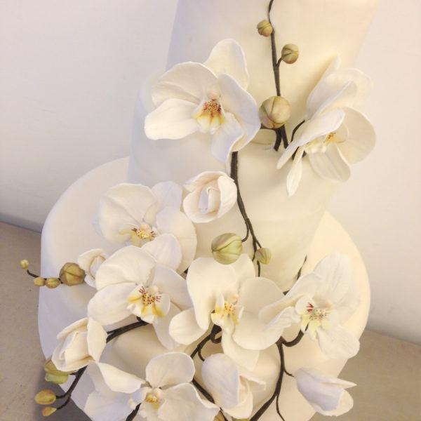 orchidea003