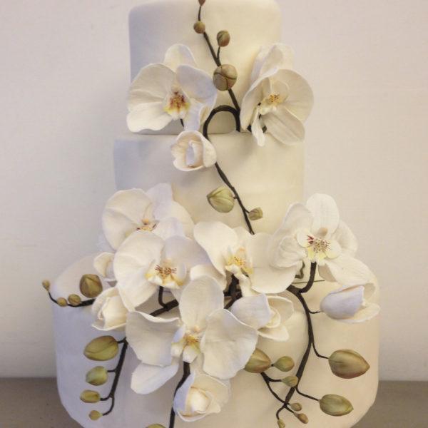 orchidea004